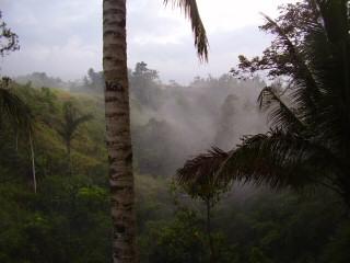 tropical mist